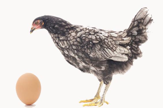 Forskningen slår fast: Ägget kom före hönan